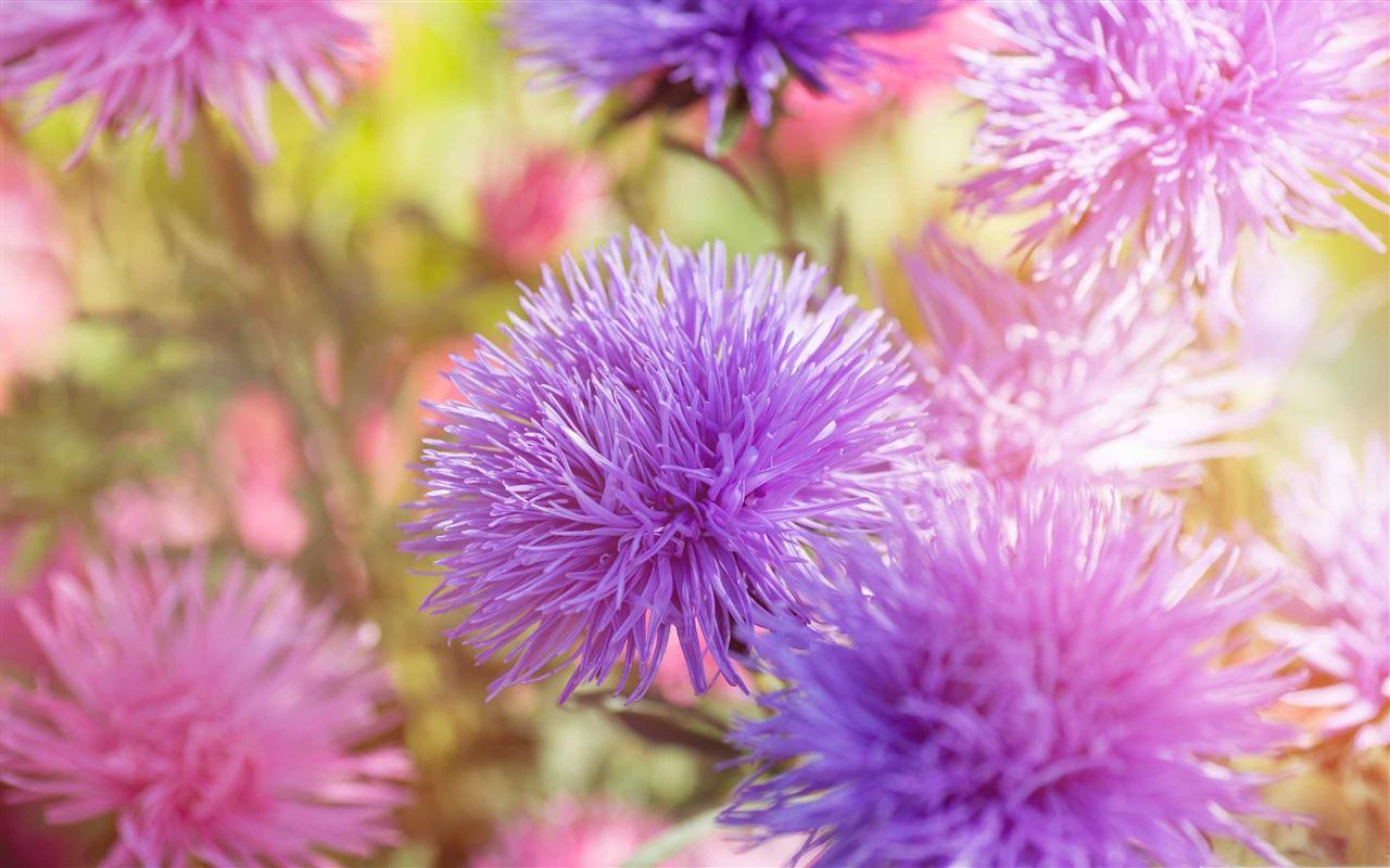 Purple fluffy flowers mac wallpaper download free mac - Flower wallpaper macbook ...