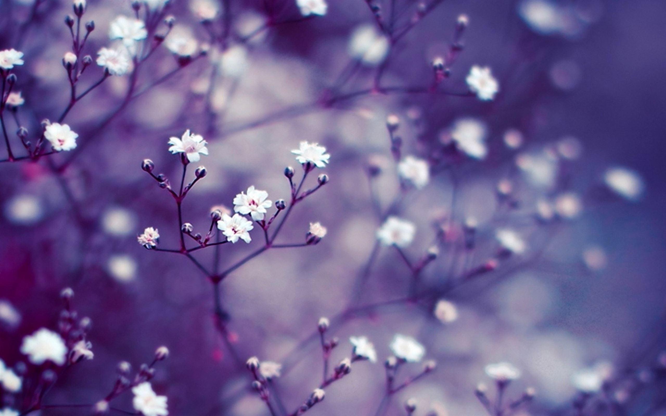 Nature Flowers Macro Mac Wallpaper Download