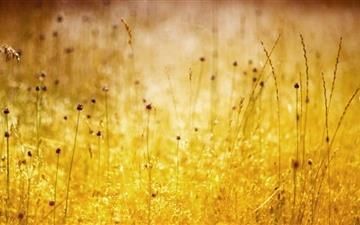 Golden Wildflowers Mac wallpaper
