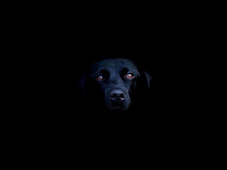 Black Dog Mac Wallpaper