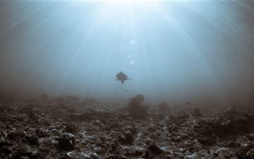 Sea Turtle Underwater Mac wallpaper
