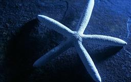 Wonderful Starfish Mac wallpaper