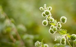 Plant Close Up