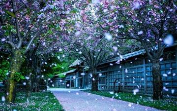 Falling petals Mac wallpaper