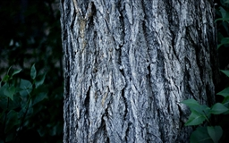 Tree Trunk Close Up Mac wallpaper