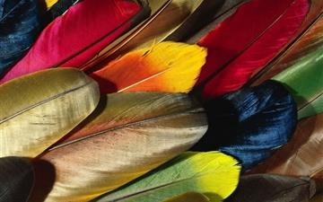 Parrot Feather Colorful Mac wallpaper