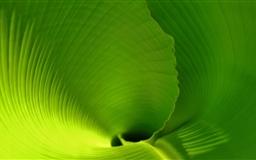 banana Leaf Close Up Mac wallpaper