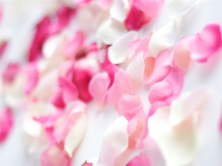 Pink Orchid Flowers Mac Wallpaper