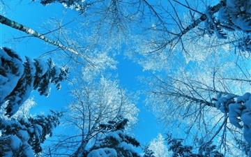 Tree Tops And Blue Sky Mac wallpaper