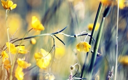 Buttercups Mac wallpaper