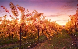 Sunset In The Russian River Valley Mac wallpaper