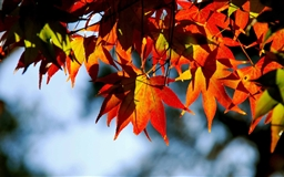 Autumnal Tints Mac wallpaper