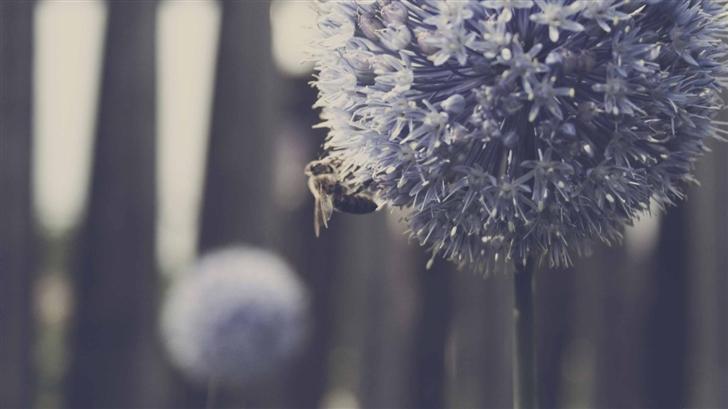 Bee Blue Flower Mac Wallpaper