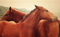 The Horse Mac wallpaper