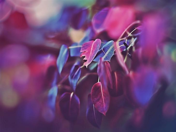 Purple Leaves Bokeh 2 Mac Wallpaper