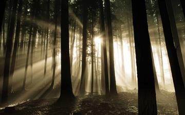 Sun Rays Through Trees Mac wallpaper