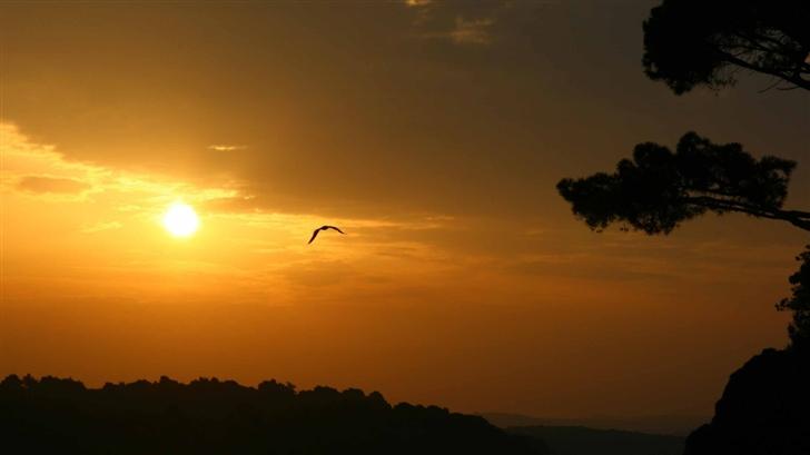 Bird And Sunset Mac Wallpaper