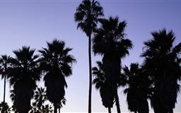 Palm Trees Venice Beach Los Angeles Mac wallpaper