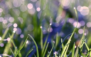 Grass With Morning Dew Mac wallpaper