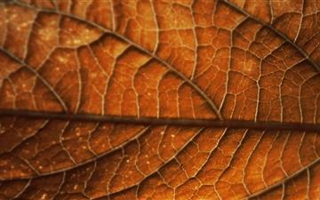 Autumn Leaf Background Mac wallpaper