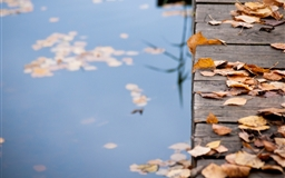 Autumn Leaves On Wooden Bridge Mac wallpaper