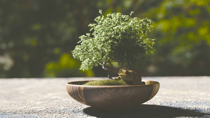 Top Benefits Of The Bonsai Plants That Make It A Must Buy For Your Home Or Office By Green Decor Medium