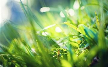 Grass Bokeh 2 Mac wallpaper