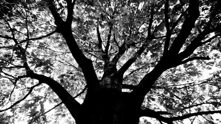 Knew A Tree In Boston Mac Wallpaper