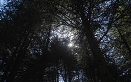 Suns Rays Thru Shades Mac wallpaper