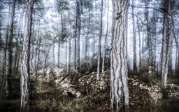 The Misty Forest Mac wallpaper