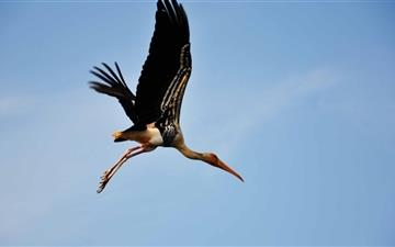 Painted Stork Mac wallpaper