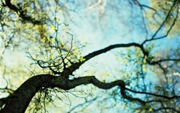 Branches spring Mac wallpaper