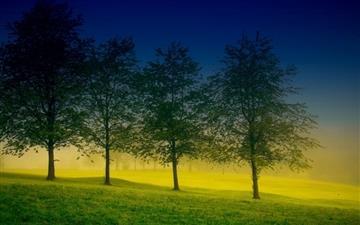 Four trees Mac wallpaper