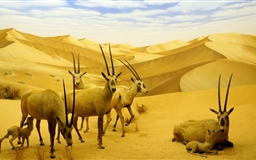 Los Angeles Natural History Museum Mac wallpaper