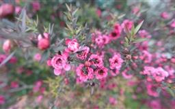 Nature Flower Mac wallpaper