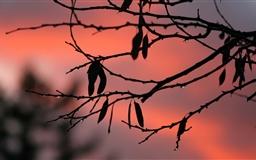 Tree Twigs Twilight Mac wallpaper