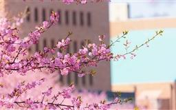Urban Spring Mac wallpaper