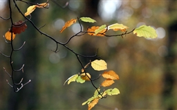 Autumn Twig Mac wallpaper