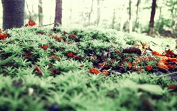 Ground Moss Mac wallpaper