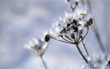 Plant Covered In Snow Mac wallpaper