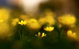 Close Up Yellow Flowers Mac wallpaper