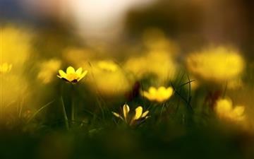 Close Up Yellow Flowers Mac wallpaper