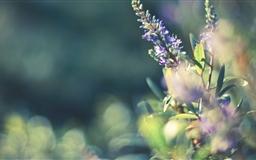 Flower Bokeh Mac wallpaper