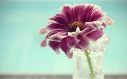 Violet Flower In Vase Mac wallpaper