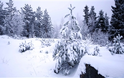 Winter In The Forest Mac wallpaper