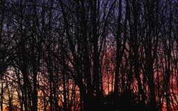 Sunset Tree Mac wallpaper