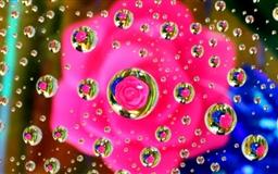 Pink Flower Water Drop Mac wallpaper
