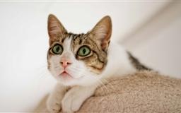 Cat Looking Up Mac wallpaper