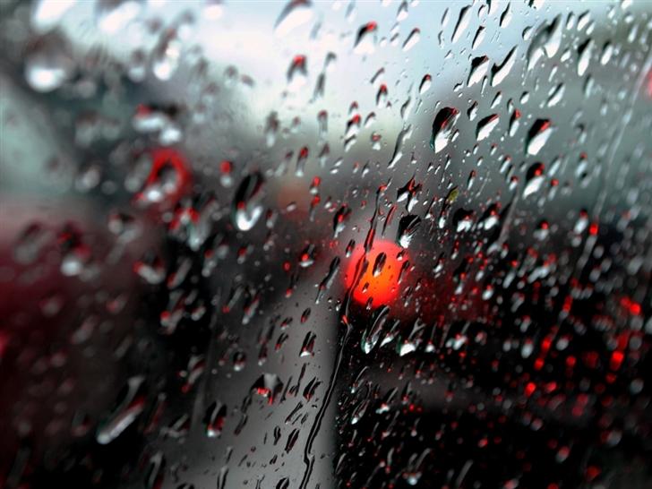 Fresh Rain DropsFresh Rain Drops Mac Wallpaper