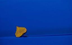 Yellow Leaf On Blue Background Mac wallpaper